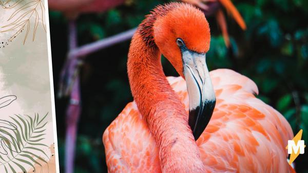 Зоопарк показал, как едят фламинго (видео)