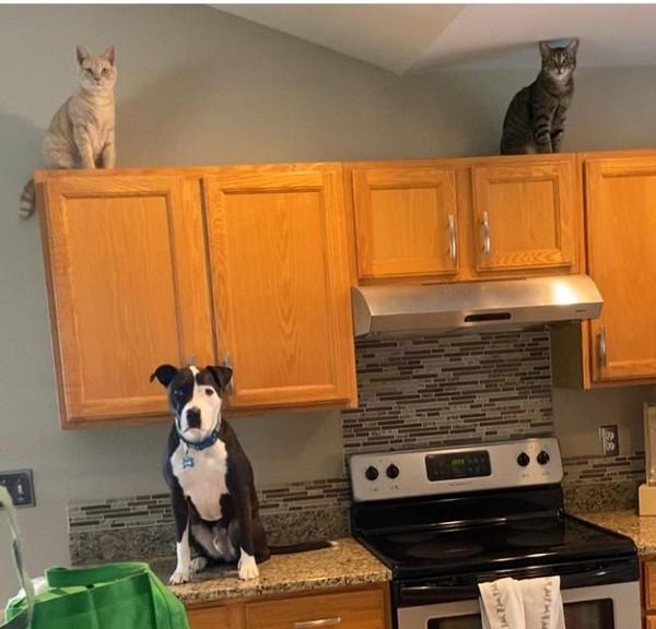 Собаки, которые думают, что они кошки (забавная галерея)  20 фото