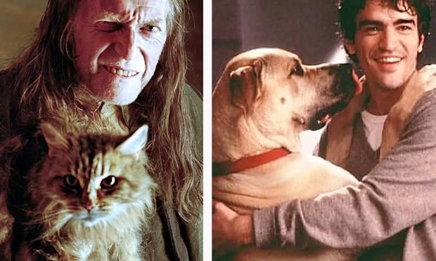 Собачники vs кошатники ученые установили, чем отличаются их характеры (не очень приятные новости для владельцев кошек)