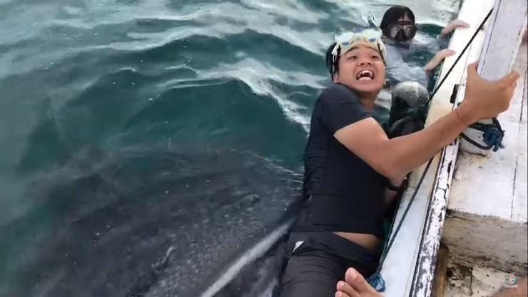Видео Дружелюбная китовая акула попробовала футболку туриста, цепляющегося за лодку