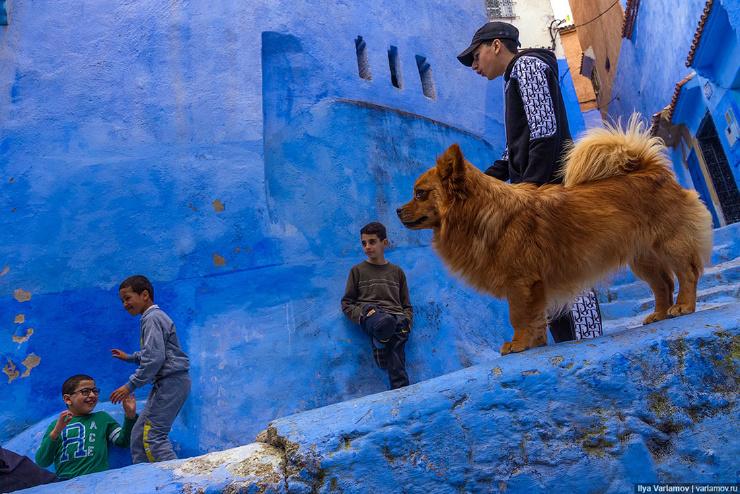 Шефшауэн голубая жемчужина Марокко, которая лучше Сургута  фото