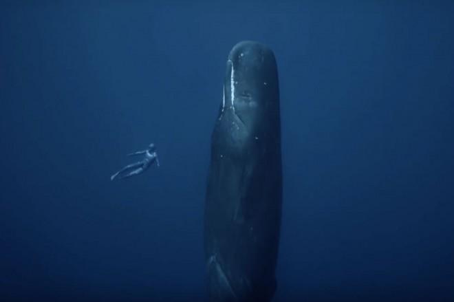 Отчаянный дайвер нырнул к спящим кашалотам и снял гигантских существ на видео