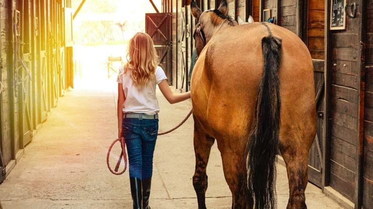 Оказывается, что лошади НЕ привязываются к своим хозяевам
