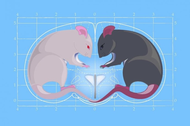 Гормон любви вызвал агрессию у мышей