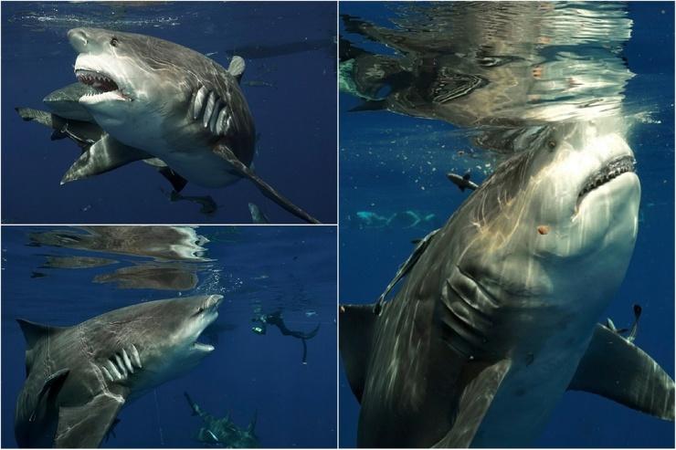 Дайвер сталкивается лицом к лицу с огромной самкой акулы во время фридайвинга близ Флориды