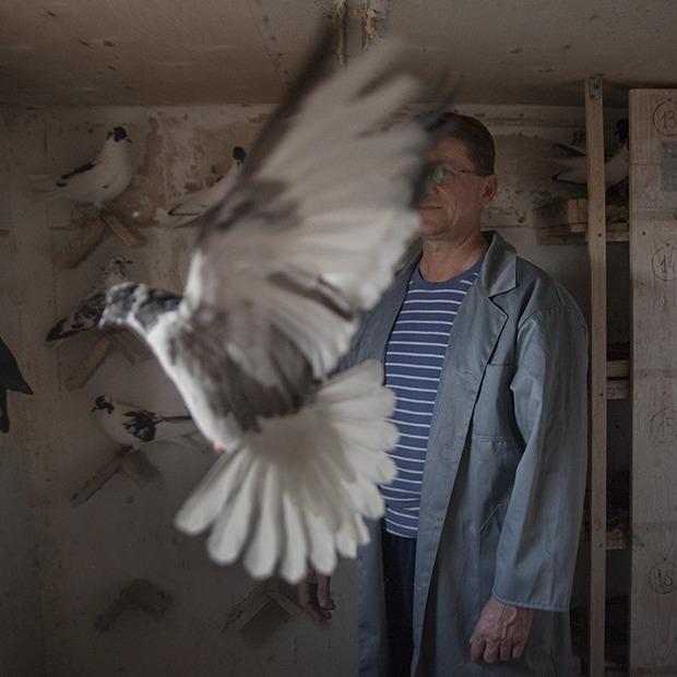 Последние романтики Кто держит голубятни в Екатеринбурге (27 фото)