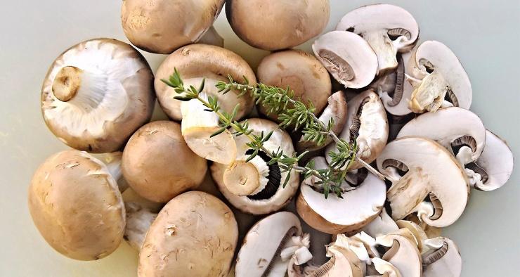 Кожу предложили делать из грибов