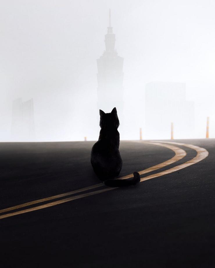 Невероятные уличные снимки Кельвина Ху (24 фото)