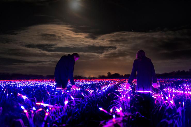 Светящееся поле в Нидерландах  фото  видео