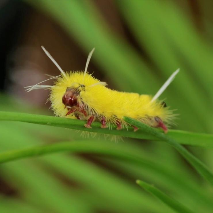 15 потрясающих воображение гусениц, которые выглядят не менее удивительно, чем бабочки
