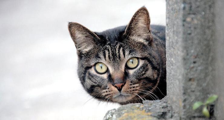 Стеклянный потолок в магазине атаковали коты, получившие славу пушистых секьюрити
