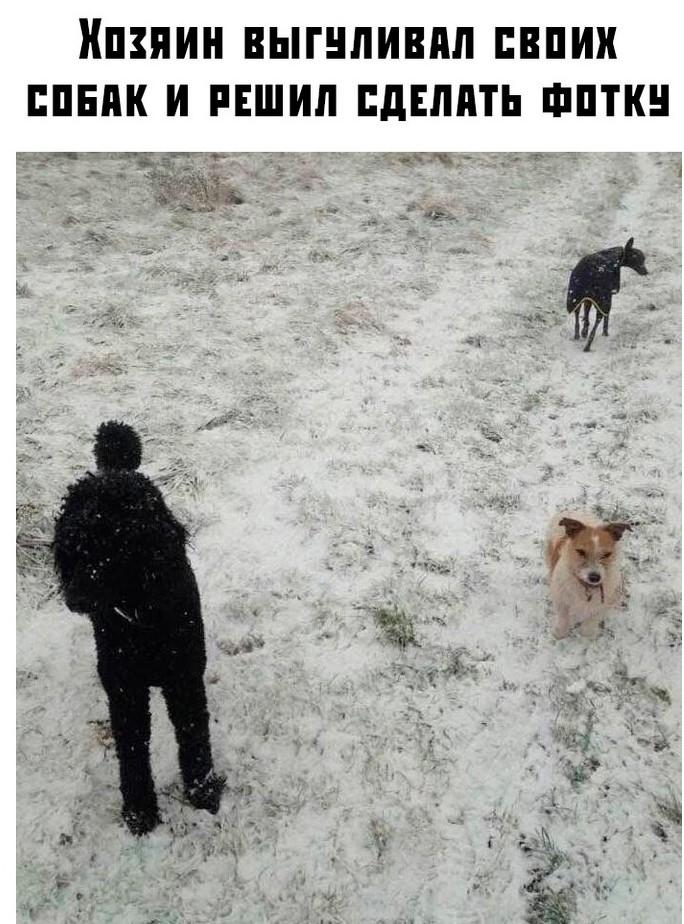 Считаем собак