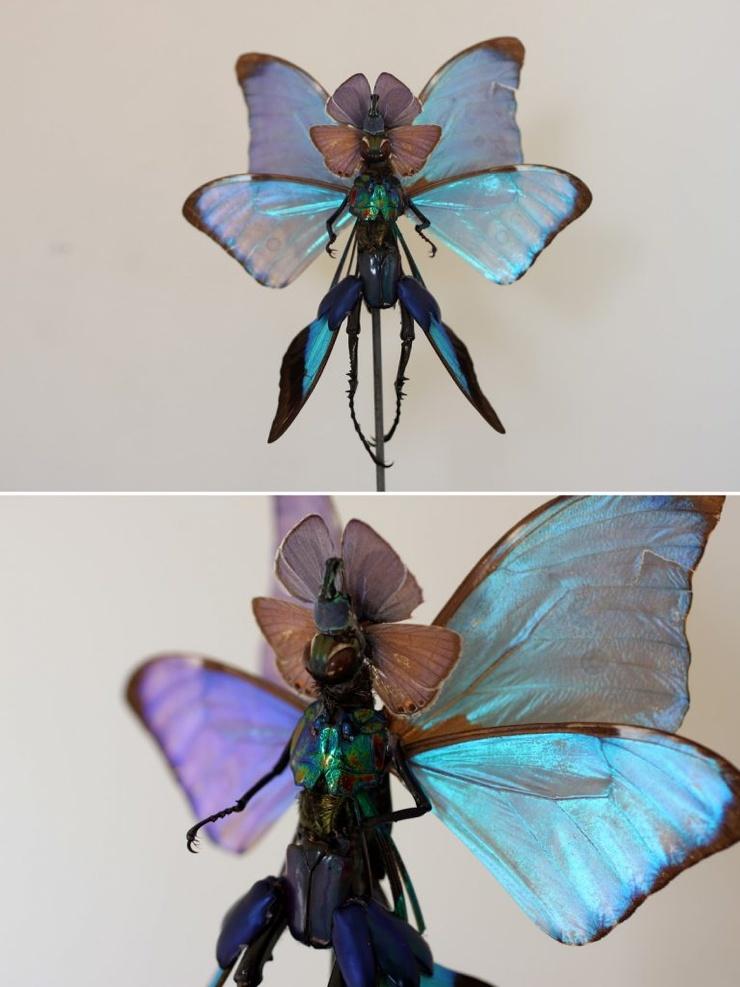 Криповая магия художник делает фей из мертвых насекомых (24 фото)