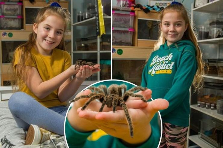 8-летняя девочка делит спальню с более чем 50 тарантулами (9 фото,видео)