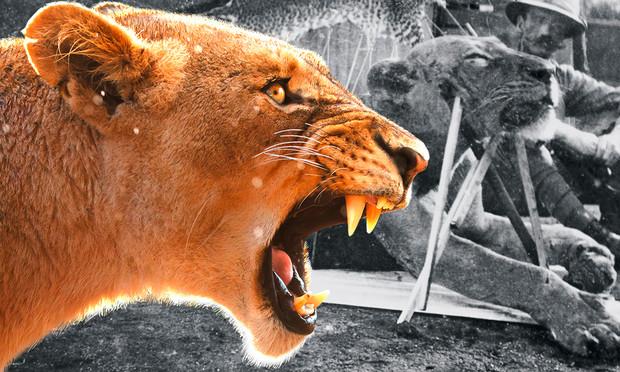 Кровожадная история самого знаменитого в истории противостояния между человеком и львом (10 фото)