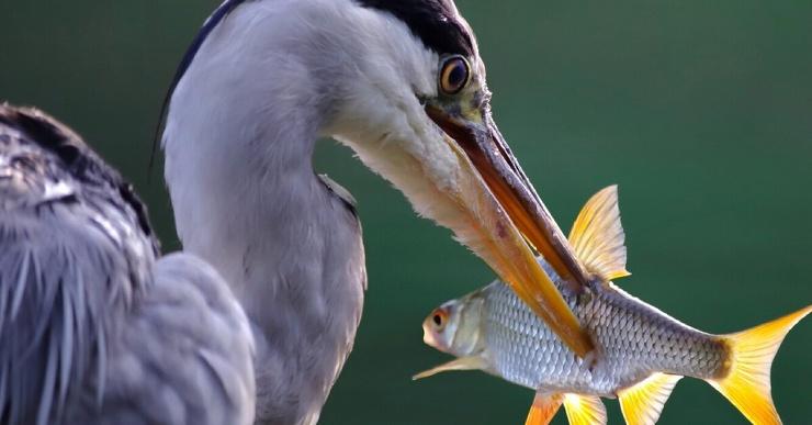 Почему рыба не просаливается в морской воде?