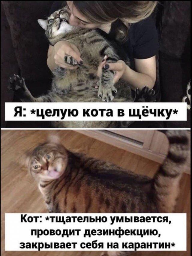 Коронавирусные мемы и картинки