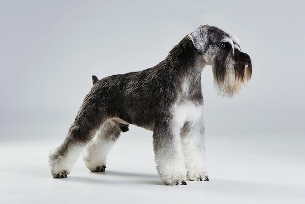 Какую собаку заводить аллергику?