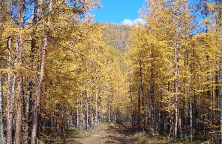 Последняя осень на Колыме  фото