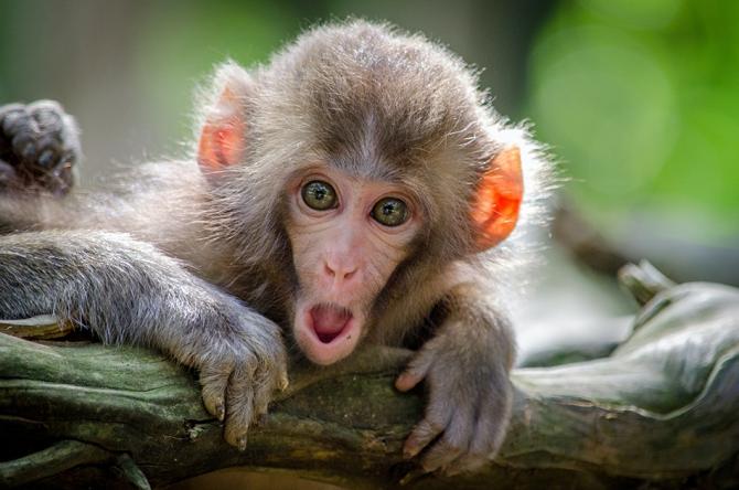 Компания Илона Маска Neuralink ввела чип в мозг обезьяны (теперь она играет в видеоигры)