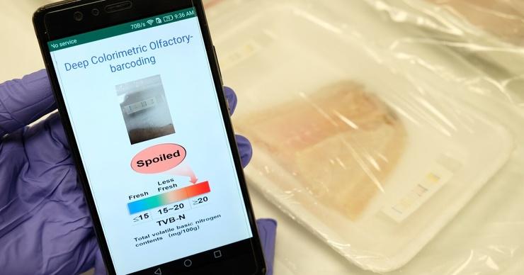 Ученые создали электронный нос для определения свежести мяса (видео)