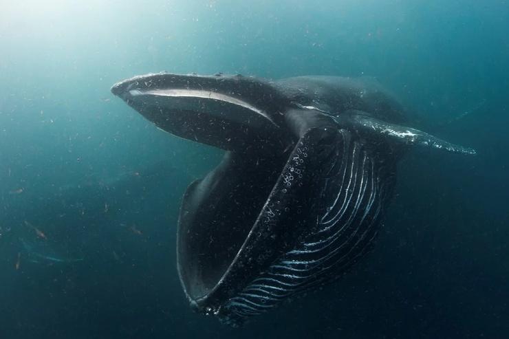 Почему у китообразных большой мозг?