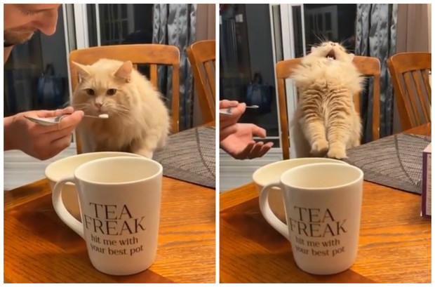Интернет покорила неожиданная реакция кота, который попробовал мороженое (видео)
