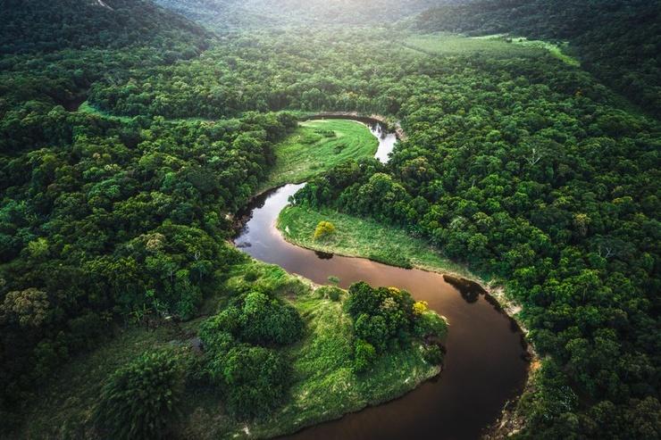 Самые большие леса мира (10 фото)