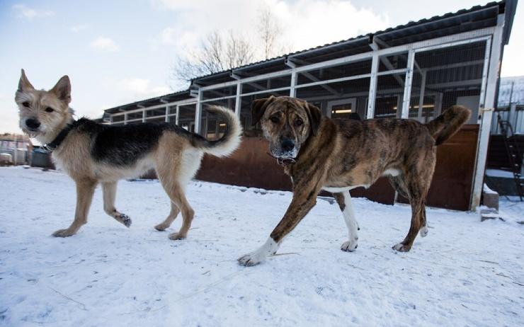 В Москве запустили онлайн-сервис по поиску пропавших домашних животных
