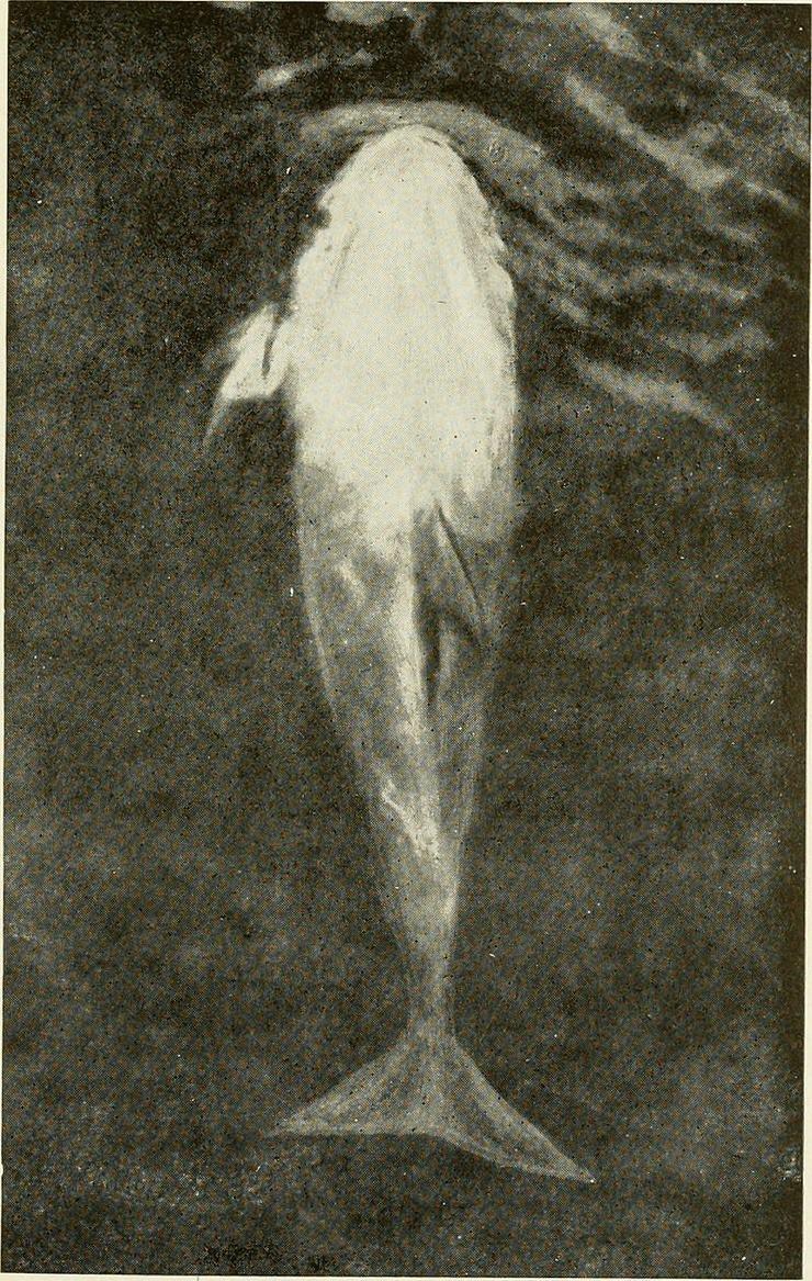 Жизнь замечательного дельфина