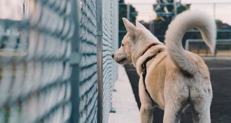 Почему собаки виляют хвостом