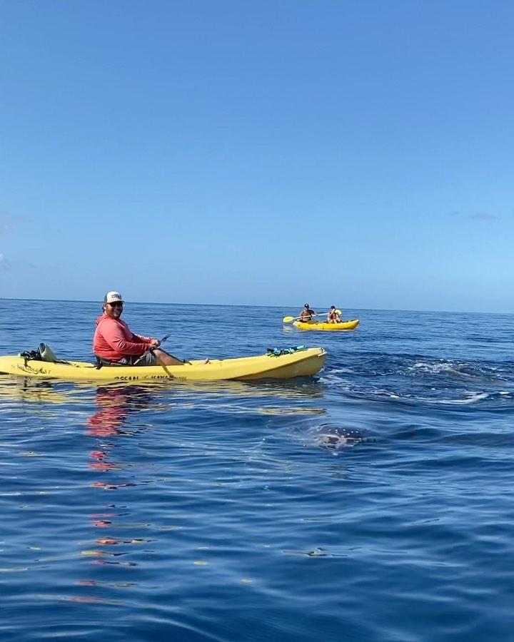 Видео горбатый кит заставил туристов визжать и молиться