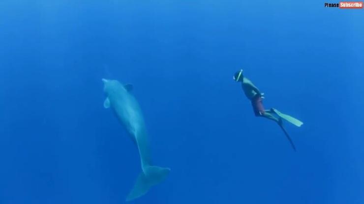 Видео из открытого моря Кашалоты плавают с людьми и даже заигрывают с ними