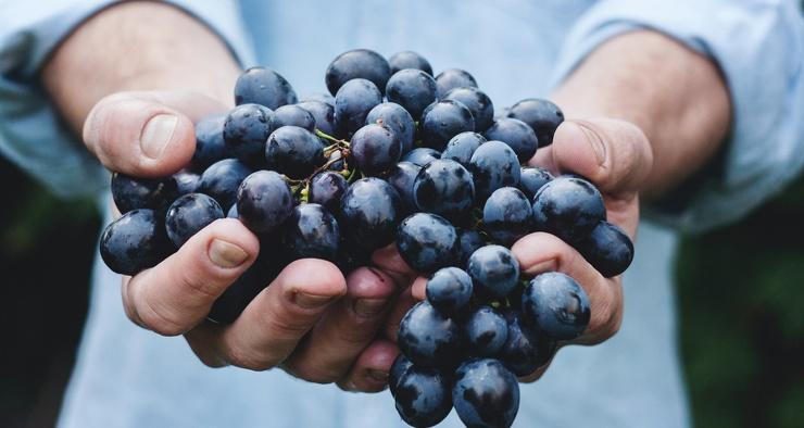 Обладает ли виноградный сок полезными свойствами вина