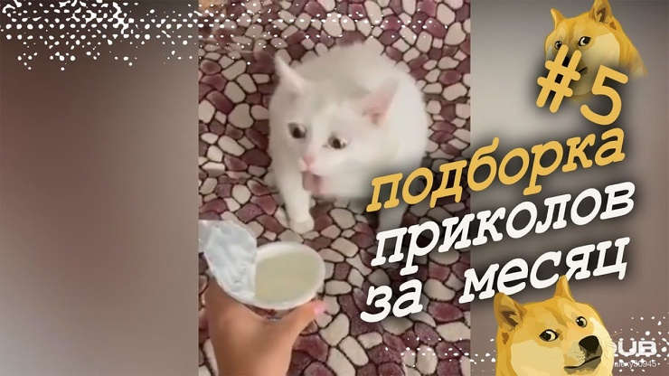 Очередная подборка свежих приколов 5 от 28.11  видео