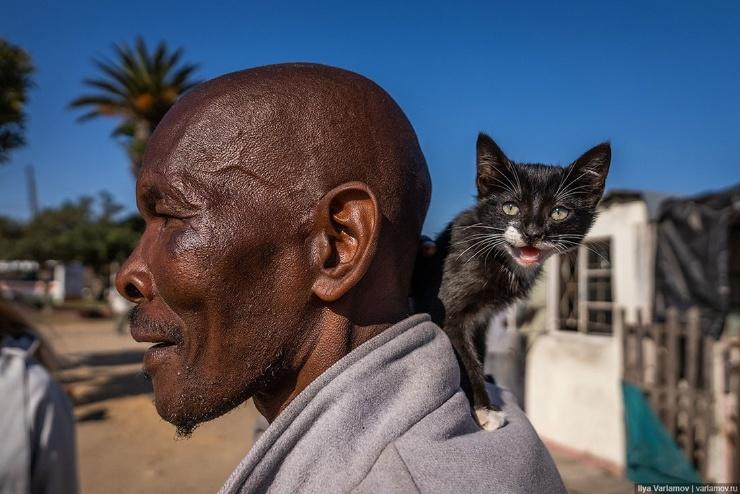 Кейптаун, ЮАР лучший американский город! (70 фото,видео)