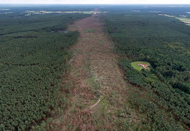 История одной фотографии прореха, которую смерч оставил после себя в лесу