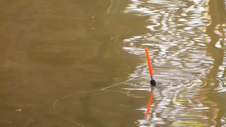 Активный клёв. Рыбы много. Рыбалка на поплавок. Поклёвки крупным планом. (видео)
