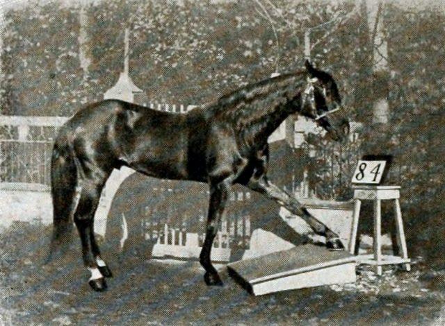Эффект Умного Ганса или конь с интеллектом человека