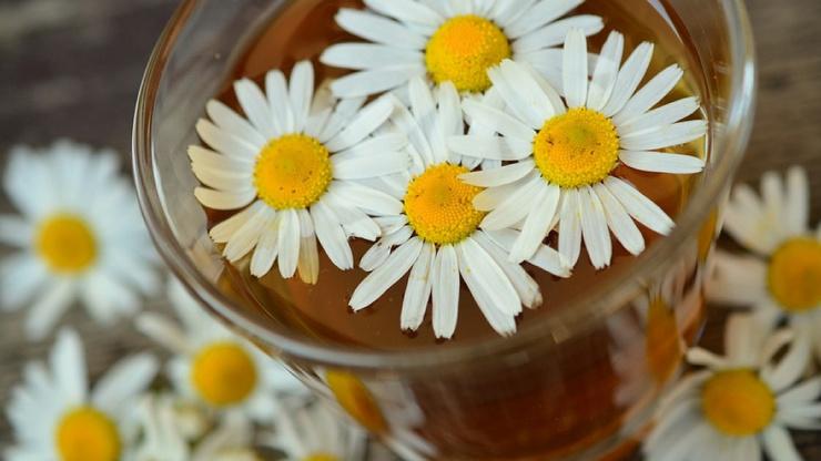 Правда ли, что чай с ромашкой успокаивает и помогает уснуть