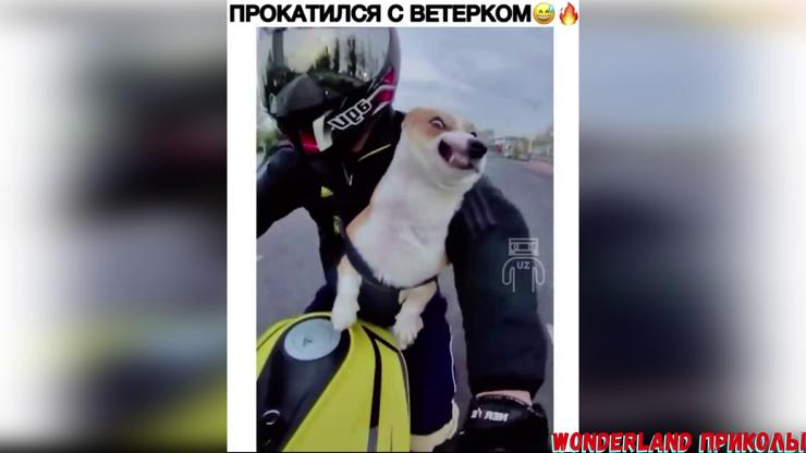 ЛУЧШИЕ ПРИКОЛ 2020 юмор угар Приколы Jokes 65 видео