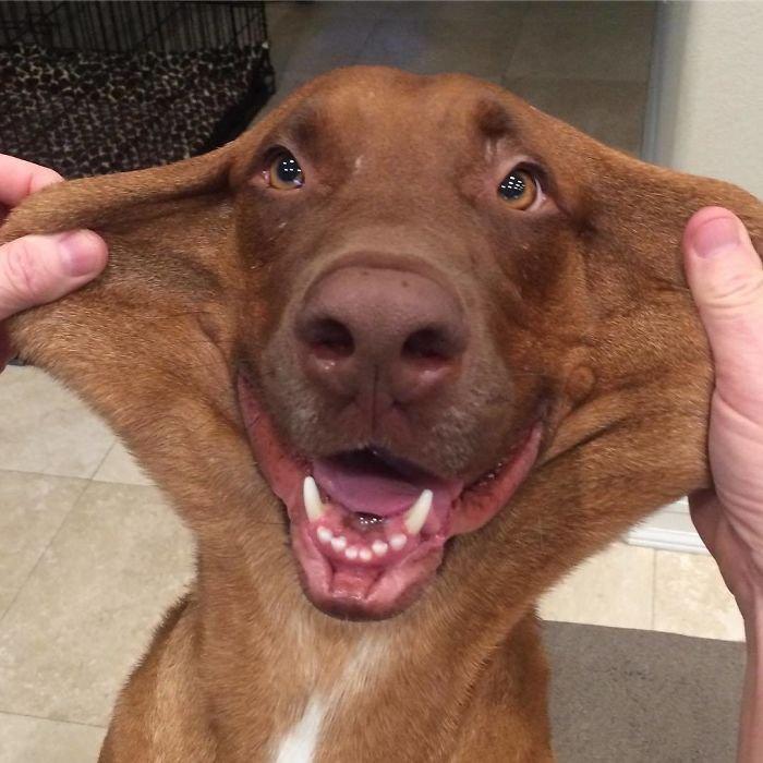 Собаки с забавными щеками