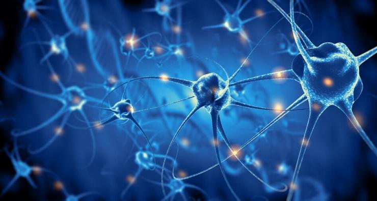 Правда ли, что у человека 100 000 000 000 клеток мозга