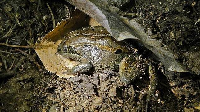 Почему замороженные лягушки оживают, а люди  нет