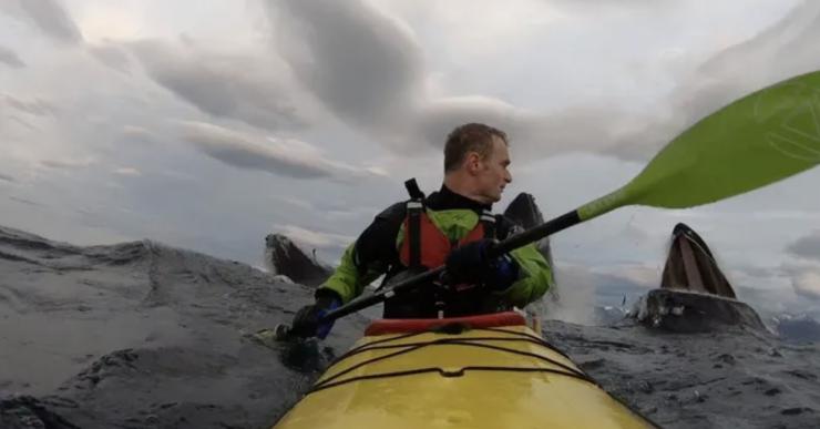 Как три кита перепугали каякера видео