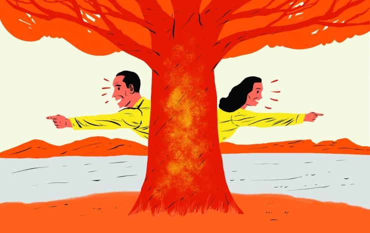 Можно ли определить стороны света по мху на деревьях?