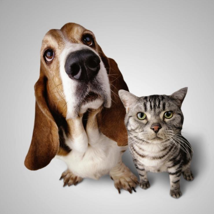 Карта где в мире больше любят кошек, а где  собак