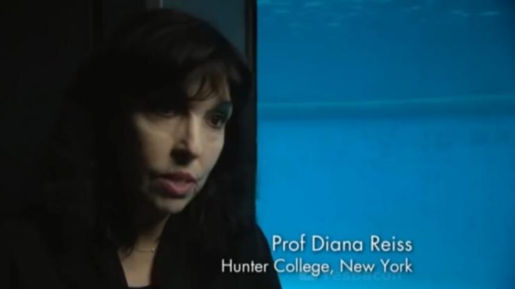 Видео Дельфин врезался в стенку аквариума в самый серьезный момент фильма