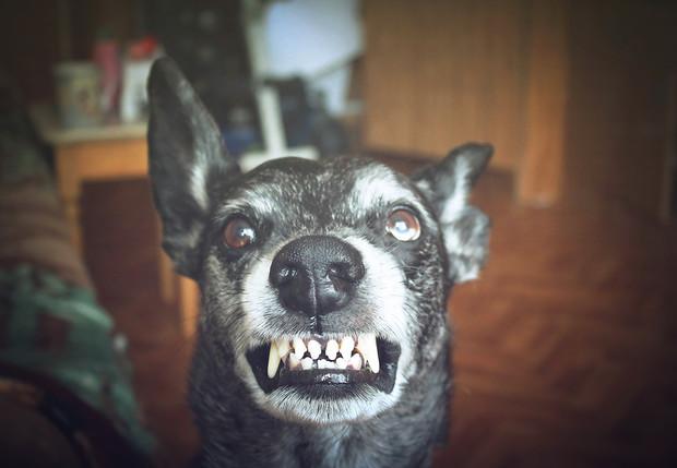 Ученые выяснили, каких людей собаки кусают чаще всего