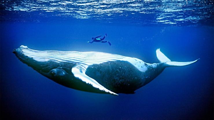 Почему морские млекопитающие такие огромные?